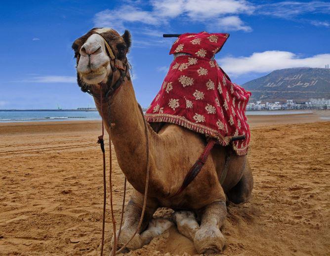 Agadir, sun and see (Vidéo)