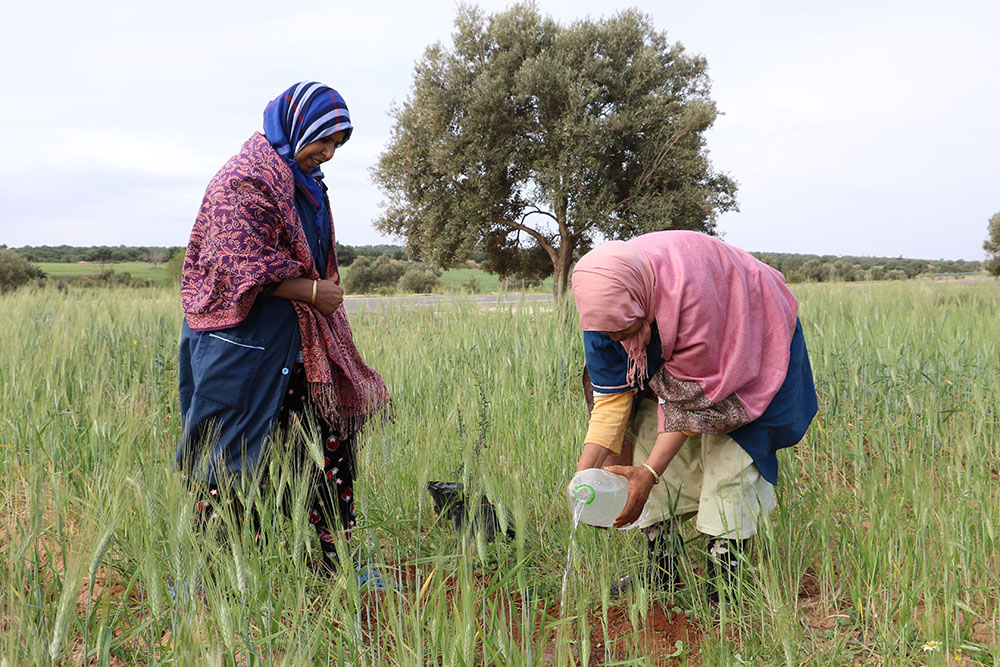 Plantation d'arbres fruitiers au Maroc en commémoration du Jour de M. L. King Jr